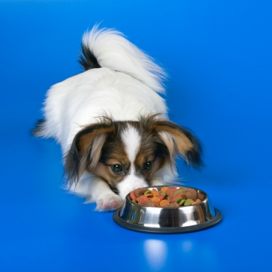 hypoallergenic dog food for food allergies